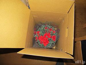 「カーネーション&銀座アップルクーヘン」配達パッケージの下段