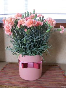 イイハナ・ドットコムの『母の日 鉢植え「カーネーション メモワール」』