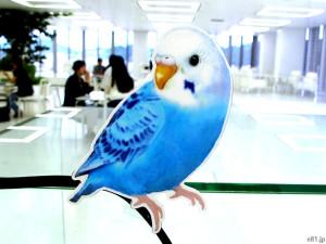 フェリシモ「こんなところに鳥が!? インコがとまるコードキーパーの会」