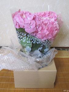 hibiyakadan.comの花鉢『母の日 アジサイ「ペガサス」』(梱包のダンボールから取り出したところ)